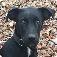Adopt A Pet :: Journey - Hagerstown, MD