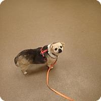 Adopt A Pet :: Kika - Wichita, KS