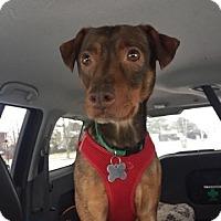 Adopt A Pet :: June *I'm overlooked* - Manassas, VA