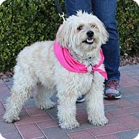 Adopt A Pet :: HERSHE - Las Vegas, NV