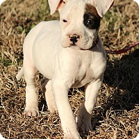 Adopt A Pet :: Molly - Harrisonburg, VA