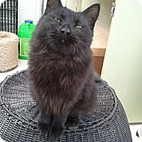 Adopt A Pet :: ESMERELDA - Anchorage, AK