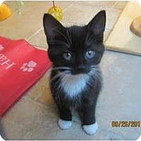 Adopt A Pet :: Ariel - Sterling Hgts, MI