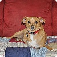 Adopt A Pet :: Sparky - Tumwater, WA