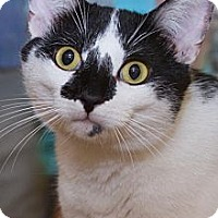 Adopt A Pet :: Jamie - Irvine, CA