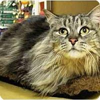 Adopt A Pet :: Promise - Irvine, CA