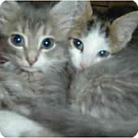 Adopt A Pet :: Marcel and Antoinette - Island Park, NY