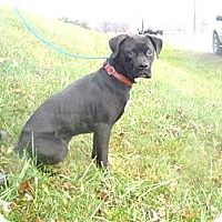 Adopt A Pet :: # 444-12 ADOPTED! - Zanesville, OH