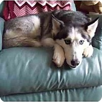 Adopt A Pet :: Lance - Belleville, MI