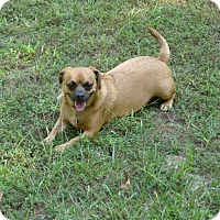 Adopt A Pet :: Eddie - North Little Rock, AR