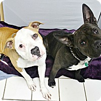 Adopt A Pet :: Josie & Belly - Forked River, NJ