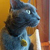 Adopt A Pet :: Charlie Brown - South Saint Paul, MN