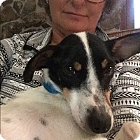 Adopt A Pet :: Mistletoe - Marietta, GA