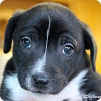 Adopt A Pet :: Tip - Bedford, VA
