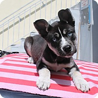 Adopt A Pet :: Fable - Los Angeles, CA