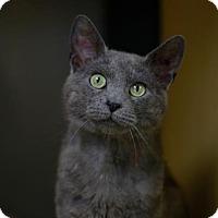 Adopt A Pet :: Kole - Kettering, OH