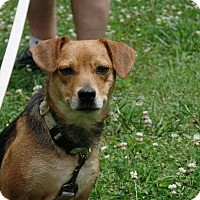 Adopt A Pet :: Leslie - Hermitage, TN
