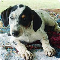 Adopt A Pet :: Jason - Staunton, VA