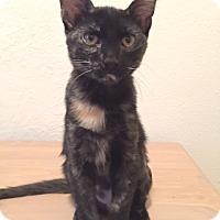 Adopt A Pet :: Jori - St. Louis, MO