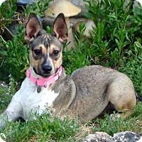 Adopt A Pet :: Lucy - Anaheim, CA