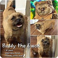 Adopt A Pet :: Buddy - Colmar, PA
