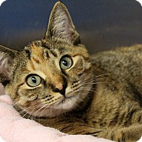 Adopt A Pet :: Rosetta - Sarasota, FL