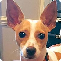 Adopt A Pet :: Odie (NC) - Raleigh, NC