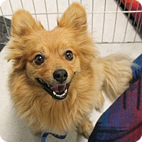 Adopt A Pet :: Channing - Rancho Cordova, CA