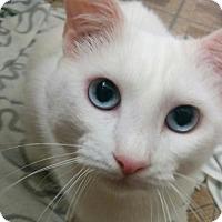 Adopt A Pet :: Anaheim - Hurst, TX