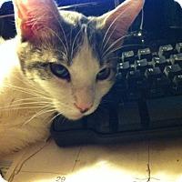 Adopt A Pet :: Jaedyn - Cerritos, CA