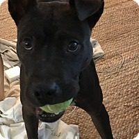 Adopt A Pet :: Kyrie - Cleveland, OH