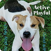 Adopt A Pet :: Dale - Mount Holly, NJ