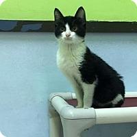 Adopt A Pet :: Tiny Tim - Janesville, WI