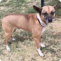 Adopt A Pet :: Sven - Centerville, GA