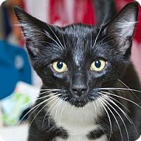 Adopt A Pet :: Max D - Sacramento, CA
