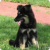 Adopt A Pet :: Taylor - Hancock, MI