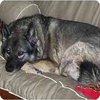 Adopt A Pet :: Yogi - Belleville, MI