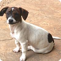 Adopt A Pet :: Dixie- MEET HER!! - Norwalk, CT