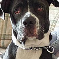 Adopt A Pet :: Gracie - Vista, CA