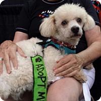 Adopt A Pet :: LUCKY - Melbourne, FL