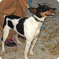 Adopt A Pet :: Jesse - Carmel, IN