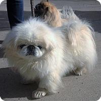 Adopt A Pet :: Zach - Fennville, MI