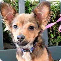 Adopt A Pet :: Flinty - Los Angeles, CA