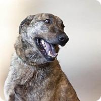 Adopt A Pet :: Henry - Rockwall, TX