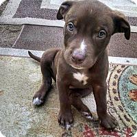 Adopt A Pet :: Darlin - Sacramento, CA