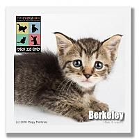 Adopt A Pet :: Berkeley - Palm Desert, CA