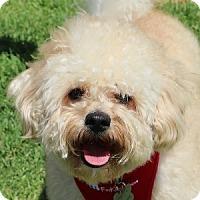 Adopt A Pet :: Boomer - La Costa, CA