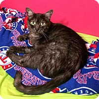Adopt A Pet :: Ethel - Hurst, TX