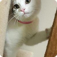 Adopt A Pet :: Gracie - Decatur, AL