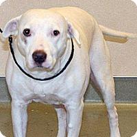 Adopt A Pet :: Molly - Wildomar, CA